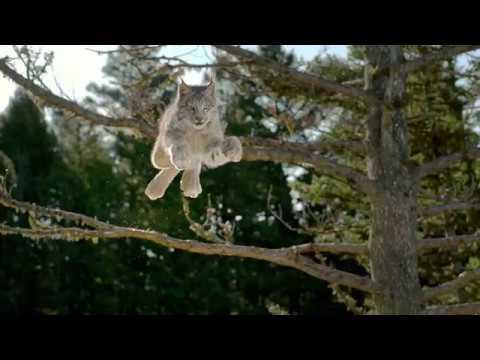 Blue Wilderness | Lynx Hunger | Blue Buffalo Wilderness Cat Food