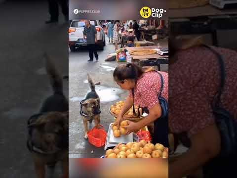 น้องหมาซื้อแอปเปิ้ล-|-Dogs-Cli
