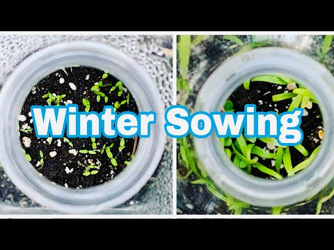 Winter Sowing - Easy Way to Start Seeds Outdoors