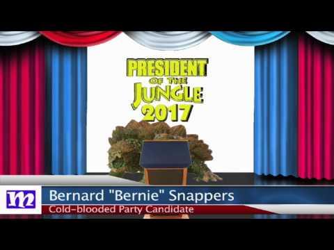 Turtle's Speech   President of the Jungle 2017   MMNN Newsbreak   Many Miniatures Theater
