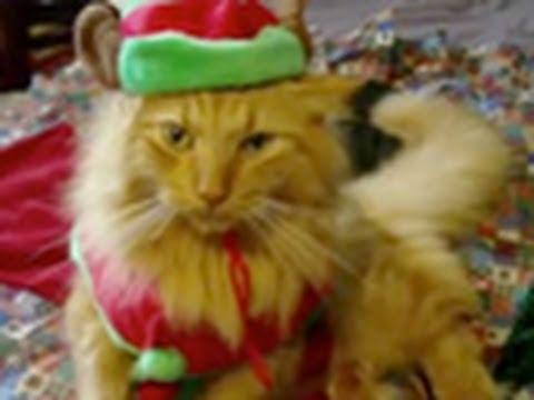 """""""Jingle Bells"""" w wykonaniu zwierzaków"""