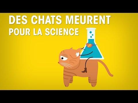 Des chats meurent pour la science : STOP ou encore ?