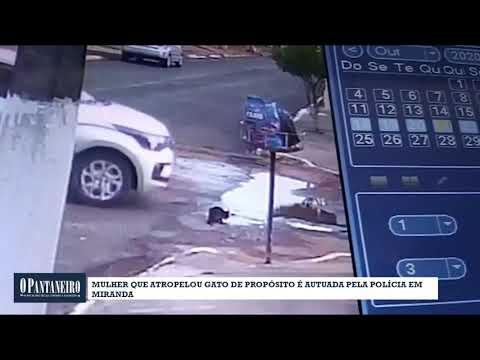 Mulher que atropelou gato de propósito é autuada pela polícia em Miranda
