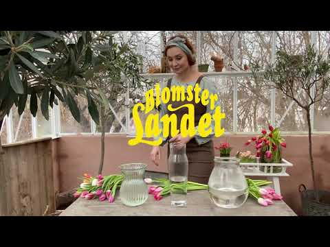 Lilla vasskolan - med Linda Schilén