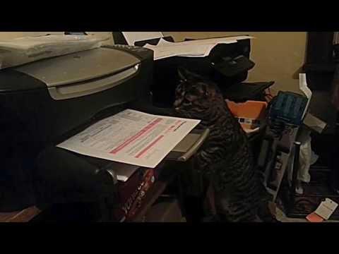 Cat Vs. Printing Paper