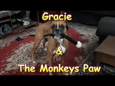 Gracie & the Monkeys Paw  Surprise Ending