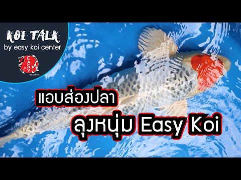 Koi-Talk-EP.6-แอบส่องปลาคาร์ฟ-