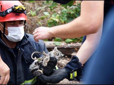 Sulama kuyusuna düşen yavru kediyi itfaiye kurtardı