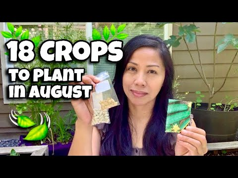 18 Crops to Plant in August, Vegetables to Plant in August
