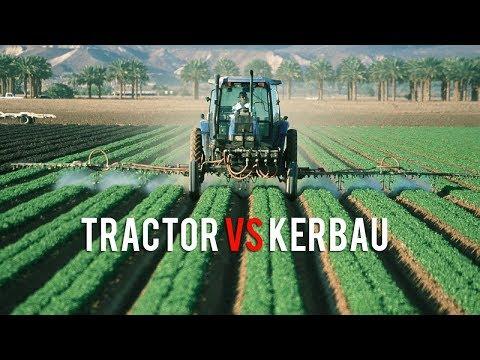 Kerbau vs tractor