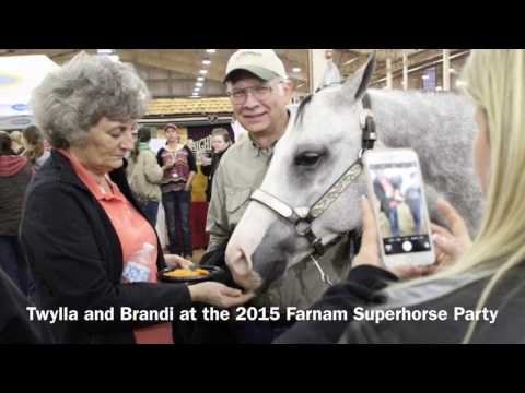 2016 AQHA Farnam Superhorse