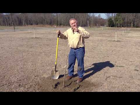 Cover photo for Planting Pecan Trees