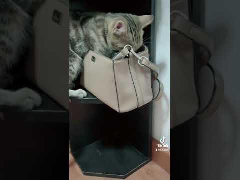 """กระเป๋าใบเล็ก-""""เพรา""""เข้าไม่ได้"""