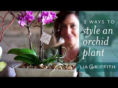 Style an Orchid Plant Like a Pro