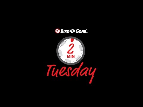 Welcome to Bird B Gone Two Minute Tuesday