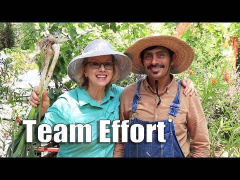 HUGE WORKDAY and GOODBYE to Zachary | Los Angeles Edible Garden