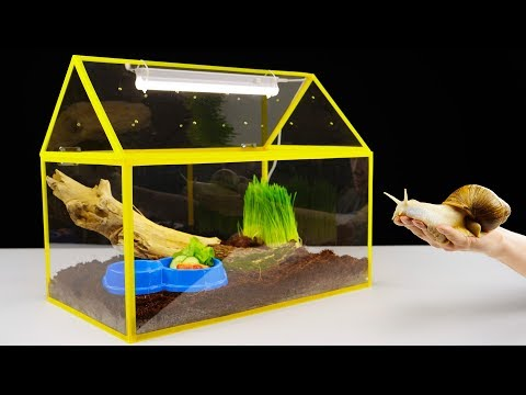 DIY Unusual Home for a Giant Snail
