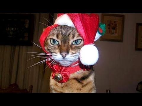connectYoutube - CATS and DOGS with CHRISTMAS PRESENTS - You've hardly seen BETTER than THIS! - Laugh with us!