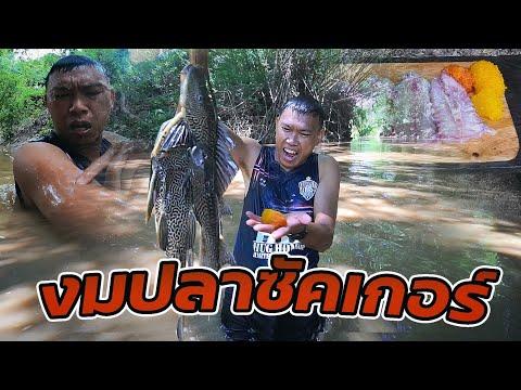 งมปลาซัคเกอร์-ตอนน้ำแดง-ได้อยู