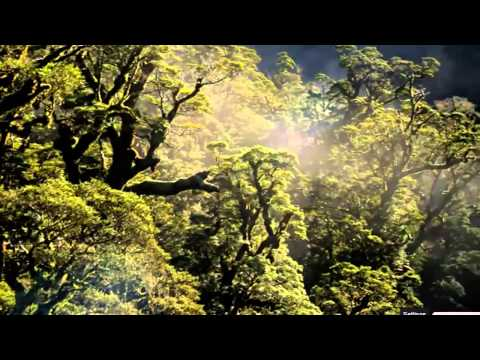 Video: Gamta - Tai viskas, ką mes turime