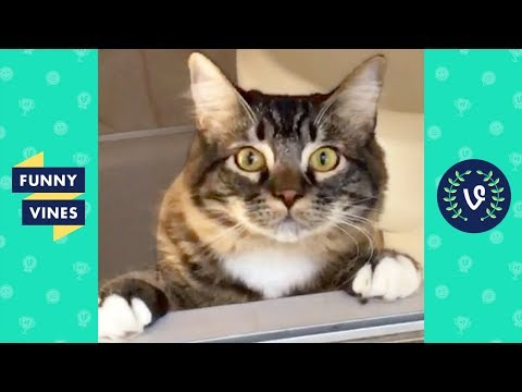 Funniest ANIMALS FAILS Compilation 2018 - Funny Animal Videos | Funny Vines