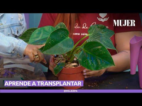 ¿Cómo transplantar una planta | Mujer