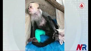 Primates electrocutados preocupan a organizaciones de rescate animal