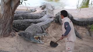 Tunisia Amazing MAN VS CROCODILE