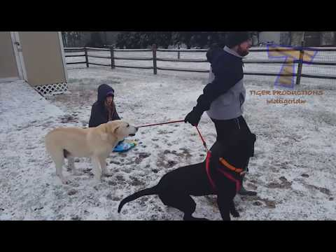 connectYoutube - FUNNIEST DOGS in SNOW COMPILATION - Haven't seen better yet! Enjoy watching and LAUGH with us!