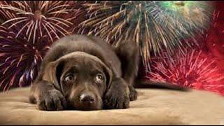 Cómo afecta la pirotecnia a nuestras mascotas