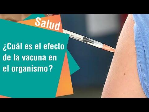 ¿Cuál es el efecto de la vacuna en el organismo | Salud