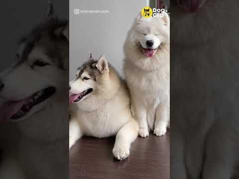 ใจเย็น-ๆ-เพื่อน-|-Dogs-Clip