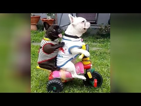 The FUNNIEST DOGS! If you DON'T LAUGH, then YOU'RE A ROBOT! - Funny DOG VIDEOS
