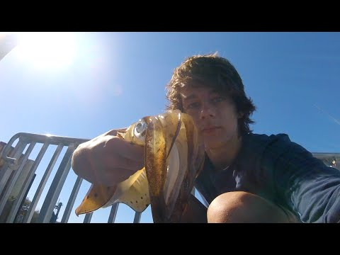 SQUID, BREAM and STINGRAY - Catch n Cook - Fishing with DYLAN!