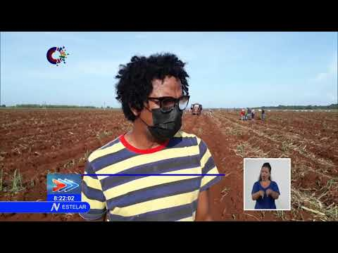 Jornada de trabajo voluntario en Matanzas en saludo a los CDR en Cuba