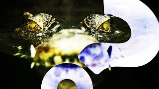 Nile Crocodiles – in Florida | HowStuffWorks NOW
