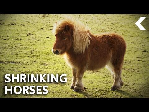 The Worldwide Phenomenon That's Shrinking Animals