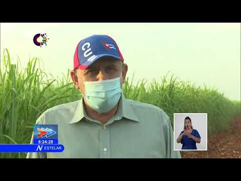 Nuevas estrategias para la siembra de caña en Cuba