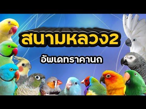 #สนามหลวง2-#อัพเดทราคานก-#นกเย