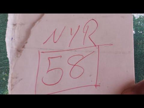 58 Nyr Un Bombasooooooo Directooo