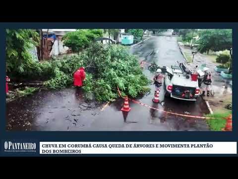 Chuva em Corumbá causa queda de árvores e movimenta plantão dos bombeiros