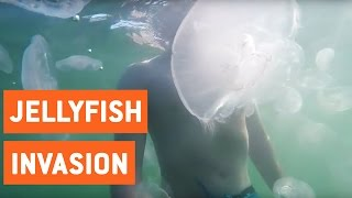 Jellyfish Invasion in San Diego | I Shall Call You Squishy