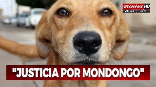 Ex policía mató a un perro: la historia del asesinato de Mondongo