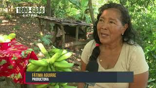 Campesinos de El Crucero, solo esperan las lluvias para comenzar a sembrar - Nicaragua