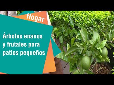 Árboles enanos y frutales para patios pequeños | Hogar