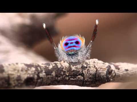 Video: Tas kvailas jausmas, - kai net voras moka tūsintis geriau už tave.