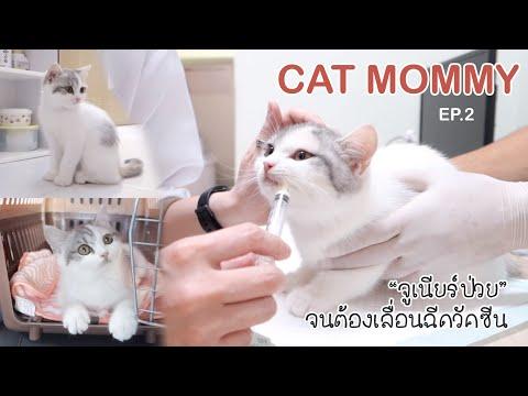 🎀-CAT-MOMMY-EP.2- -Vlog-พาจูเน