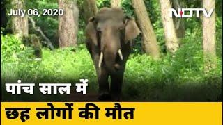 जंगली हाथी और इंसानों का संघर्ष | Des Ki Baat - NDTVINDIA