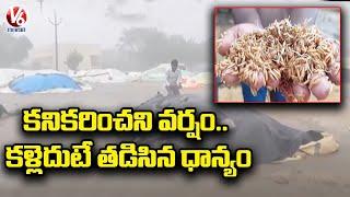 Paddy Crops Damage Due To Pre-Monsoon Rain Effect | Farmers Face Losses | Sircilla | V6 News - V6NEWSTELUGU