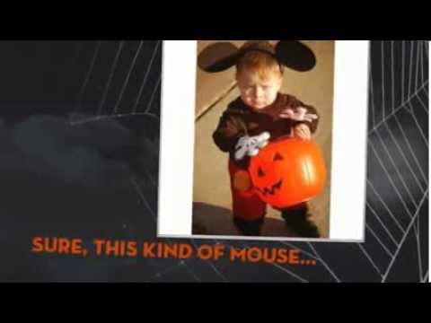 Sticky Mouse Traps Keep Pests Away from Halloween Treats